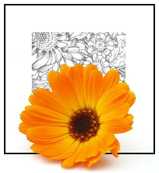 Parfum de nișă - Floral